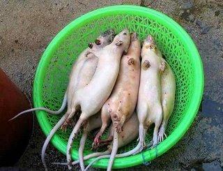rodents lying down (ratsinabowl)